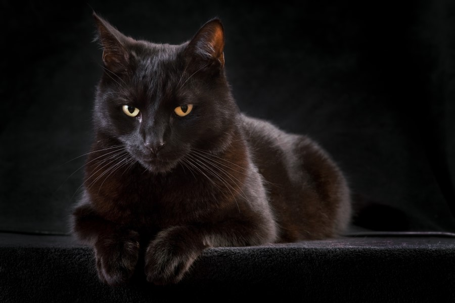 Lesson(s) of the Week: Superstitions