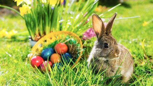 Lesson of the Week: Easter Trivia